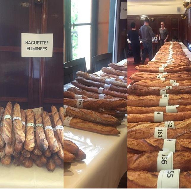 concurso de baguette